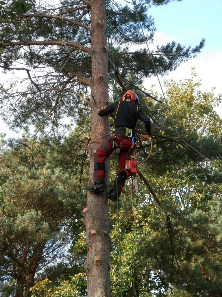 "Diagnose and prune the tree with ""tree surgeon"""