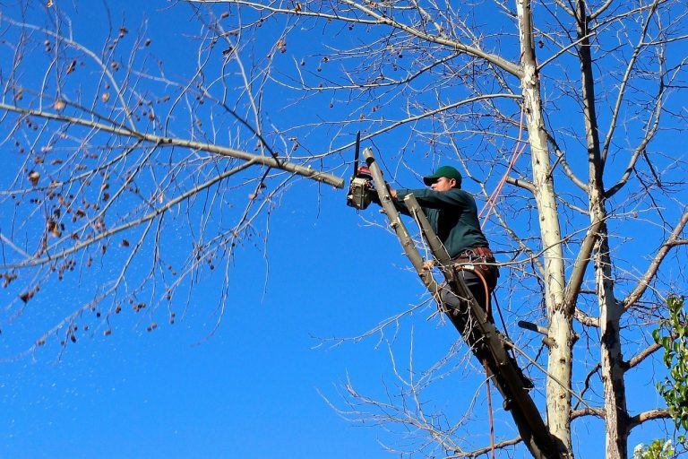 a certified contractor is cutting the tree branches