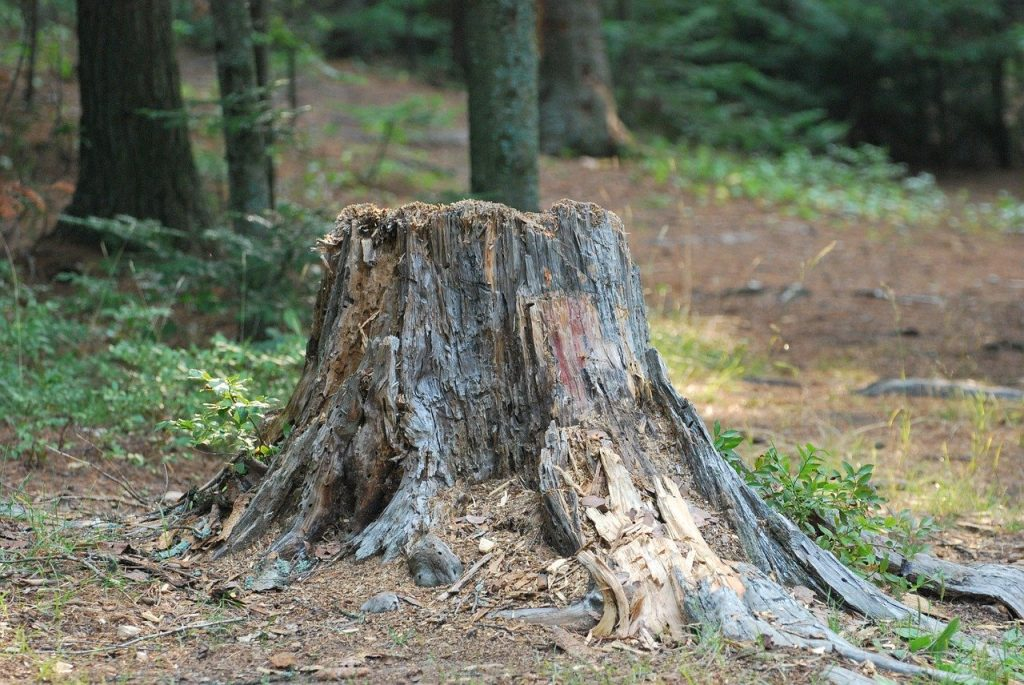 To grind this tough stump