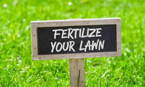 Fertilize your lawn Yard Sign in Richmond Hill